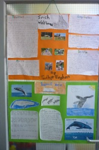 biodiversity projects 3rd class 002