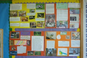 biodiversity projects 3rd class 003