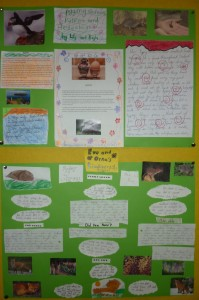 biodiversity projects 3rd class 005