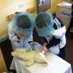The vets help a rabbit