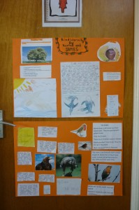 biodiversity projects 3rd class 001