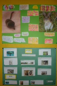 biodiversity projects 3rd class 006